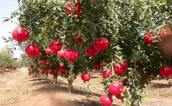 Մարտունի քաղաքում հոկտեմբերին տեղի կունենա նռան փառատոն Arts....